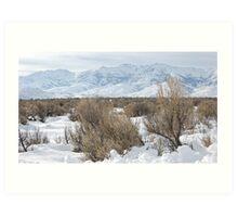 Santa Rosas in Winter Art Print