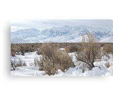 Santa Rosas in Winter Canvas Print