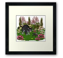 Trouble in the garden .. July Cat Framed Print