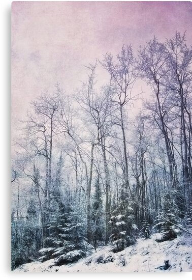 winter forest by Priska Wettstein