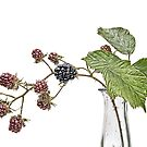 Blackberry Fruits by Ann Garrett