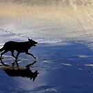 The Black Dog by Jill Fisher