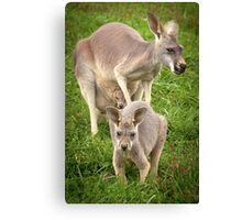 """Hop Along"" - red kangaroos Canvas Print"