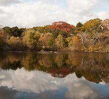 Grenadier Pond 2, High Park by aclepsa
