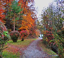 Colors of Fall. Germany. by Daidalos