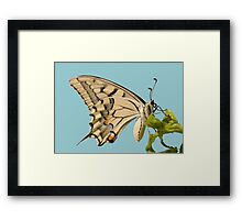 Swallowtail Butterfly Vector Isolated Framed Print