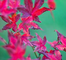 Autumn Leaves 2 by Natalie Broome