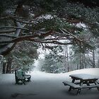 December Park by Mike  MacNeil