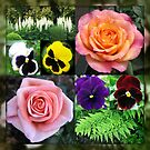 Roses and Pansies Collage by Kathryn Jones