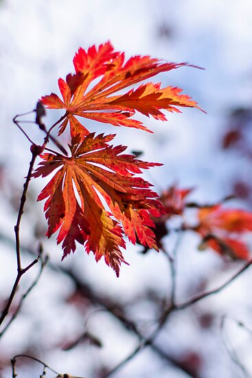 Autumn Leaves 3 by Natalie Broome