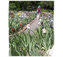 Lady Walking in a Iris Garden in Spring Poster