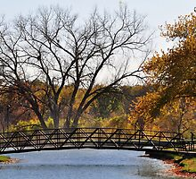 Fall Colors by MaryLynn