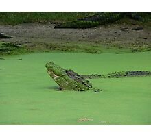 Gator No. 3 Photographic Print