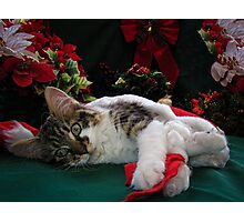 Cool Kitty Cat Lying on its Side Holding a Red Xmas Ribbon Dreaming of Christmas ~ Kitten Framed w Poinsettias Photographic Print