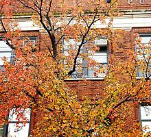 Brick leaves, Autumn in New York City  by Alberto  DeJesus