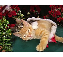 Cheshire Cat Grin ~ Cute Kittens in Love ~ Christmas Kitties in a Santa Hat Lying Down w/ Paws Stretched Out Photographic Print
