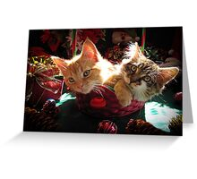Christmas Basket of Two Kittens in Love ~ Portraits of Kitty Cats in Xmas Scenery w/ Pine Cones, Red Baubles & Poinsettias Greeting Card