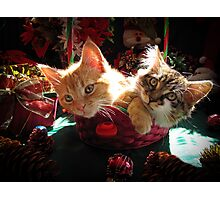 Christmas Basket of Two Kittens in Love ~ Portraits of Kitty Cats in Xmas Scenery w/ Pine Cones, Red Baubles & Poinsettias Photographic Print