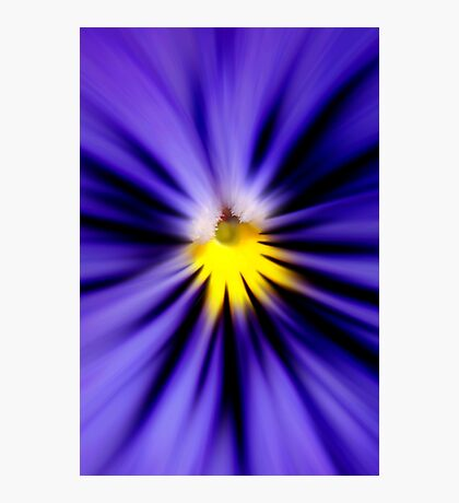 Bursting with blue pansy Photographic Print