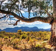 Redgum over Elder Ranges by Simon Bannatyne