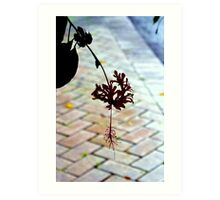 Sidewalk Bloom Art Print