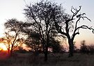 Sunrise in the Kruger by Elizabeth Kendall