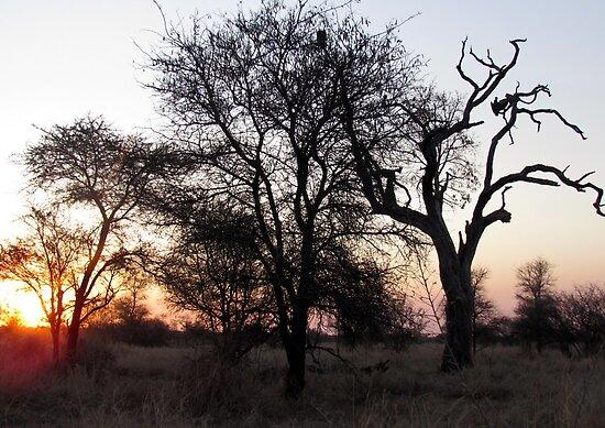Sunrise in the Kruger by Elizabeth Kendall