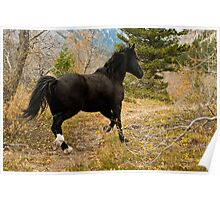 Black Horse Running in Autumn Forest Poster