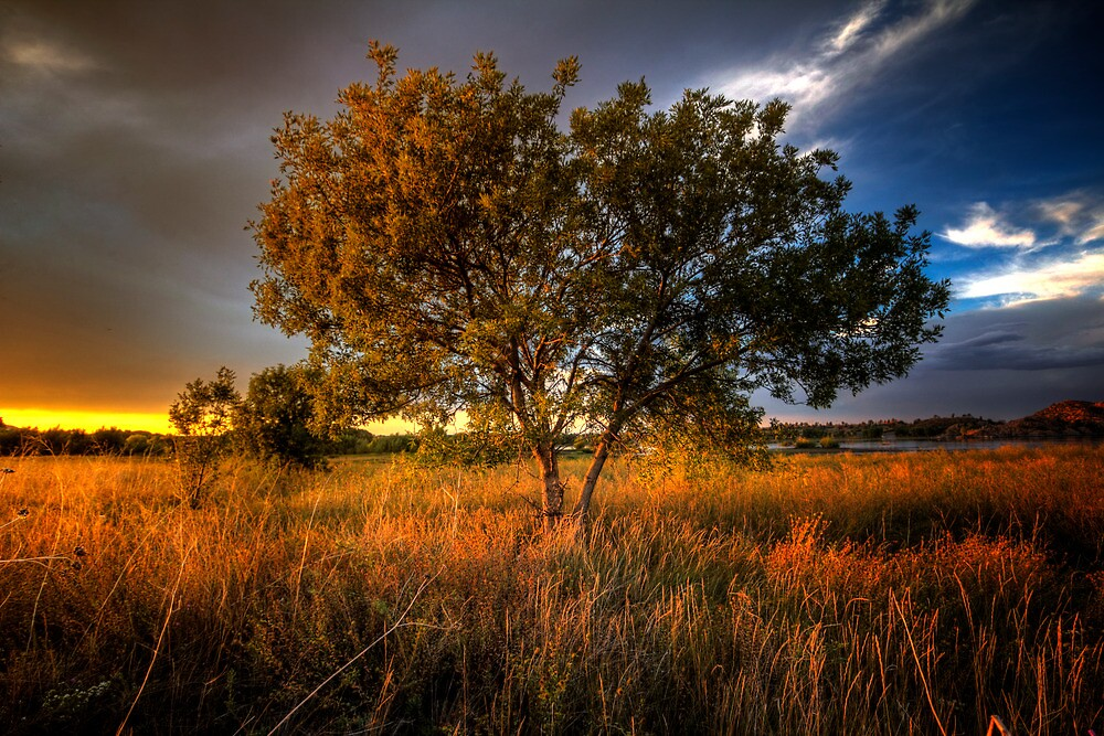 Sun Touched by Bob Larson