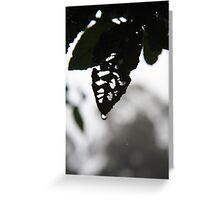 Leaf skeleton in the mist Greeting Card