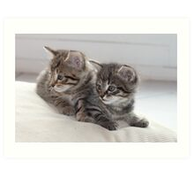 Sweet Kittens Art Print