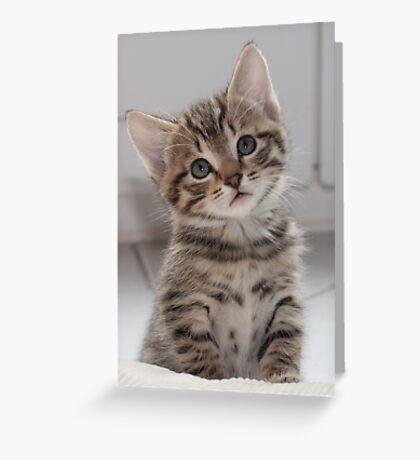 Please. Please. Tell me I'm cute. Greeting Card
