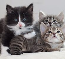 3 Kittens by Paul Murray