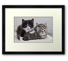 3 Kittens Framed Print