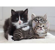 3 Kittens Photographic Print