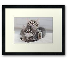 Two Kitten Framed Print