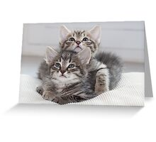 Two Kitten Greeting Card