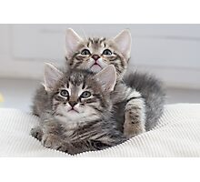 Two Kitten Photographic Print