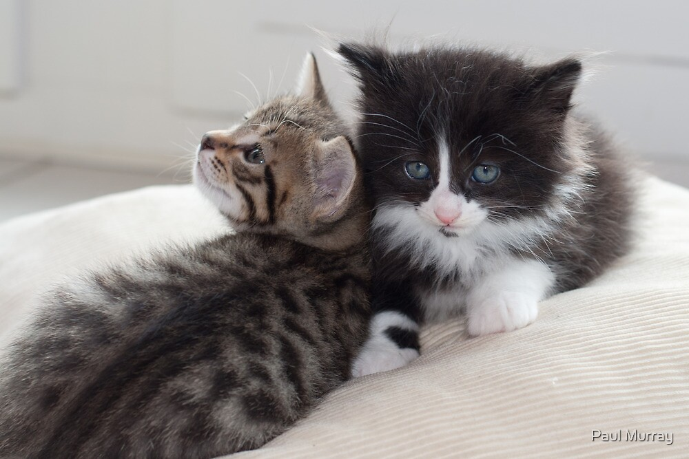 Sad Kitten by Paul Murray