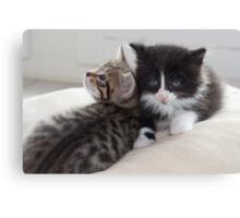 Sad Kitten Canvas Print