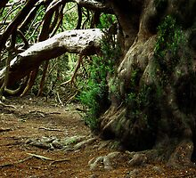 Ancient Yew Tree by Photogothica