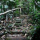 Malaysian Jungle - Pangkor Laut by breewood