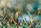 Abstract from Nature by Anne Staub