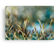 Abstract from Nature Canvas Print