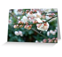 Winter Blossom - Melbourne Greeting Card