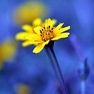 Daisy in Blue by dez7