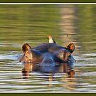 Green hippopotamus by Yves Roumazeilles