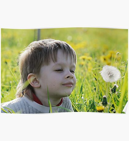 Boy in dandelion meadow. Poster