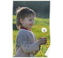 Boy in dandelion meadow. Poster