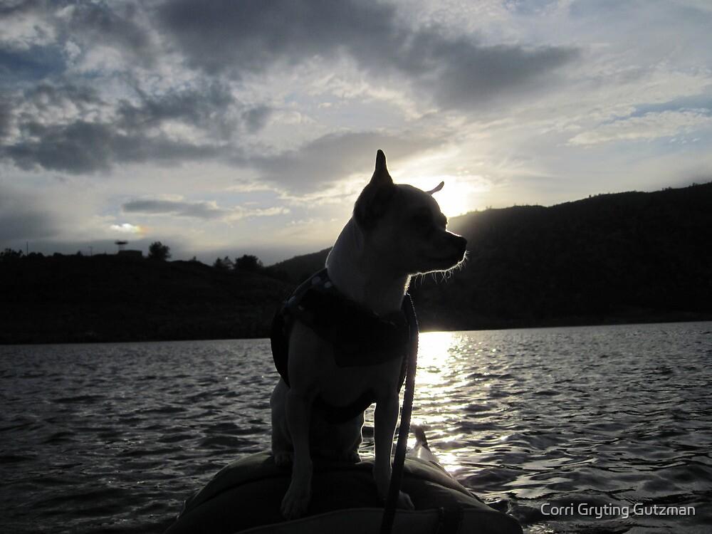 Chihuahua and the Sunset Kayak Trip by Corri Gryting Gutzman